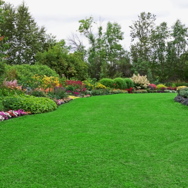 Lawn and Landscaped, full boarders