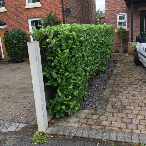 Hedge Management