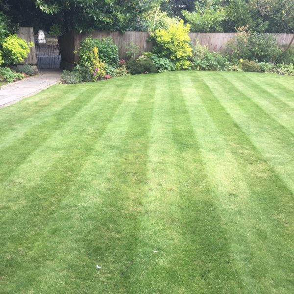 Lawn Care Garden Maintenance