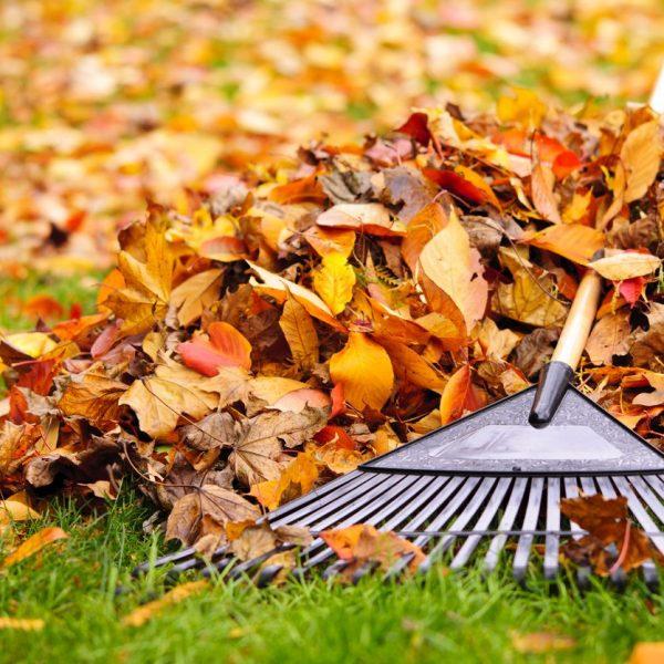 Autumn Winter Leaf Clearance