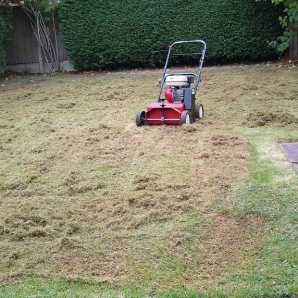Moss removal, thatch removal